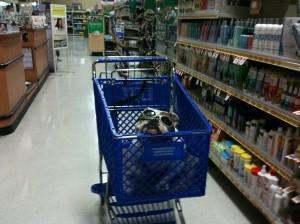 Shopping at PetSmart